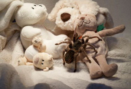 Porn with stuffed animals