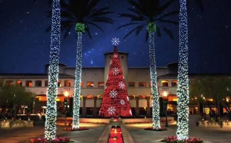 Christmas_trees_Fairmont-Scottsdale-800x497